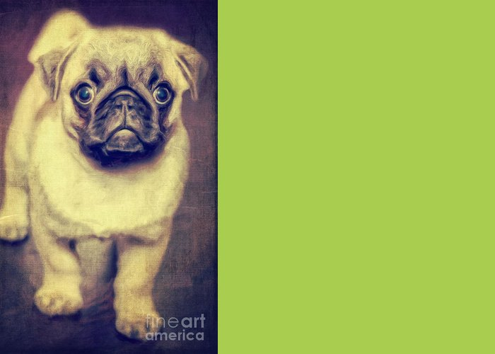 Grass Greeting Card featuring the photograph Little Dog by Angela Doelling AD DESIGN Photo and PhotoArt