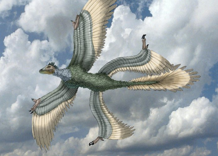 Illustration Greeting Card featuring the photograph Microraptor by Spencer Sutton