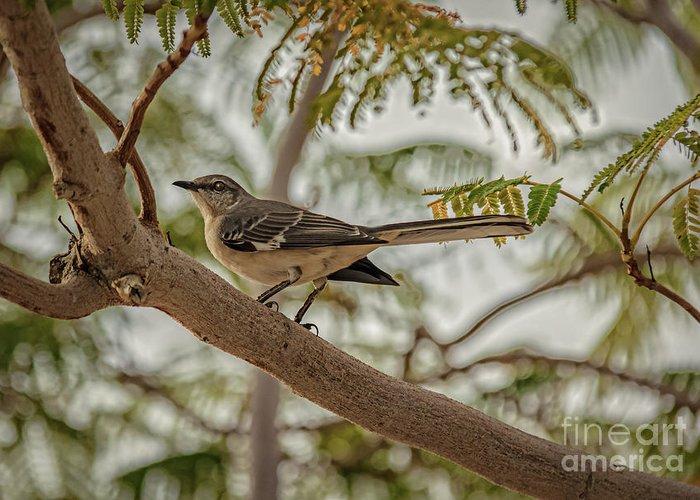 Arizona Greeting Card featuring the photograph Mockingbird by Robert Bales