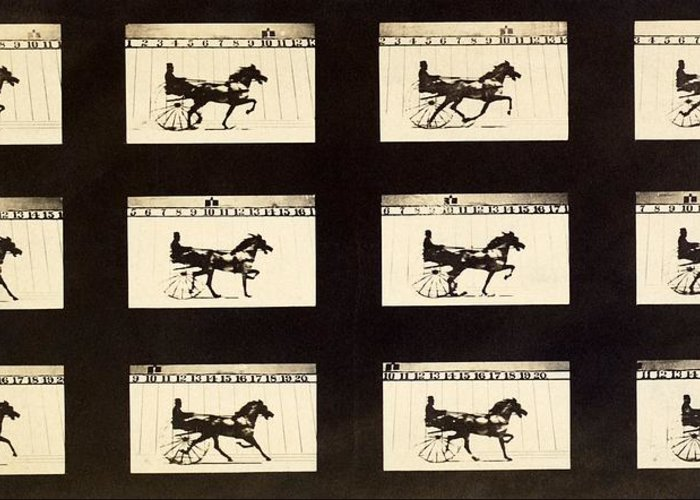 Abe Edgington Greeting Card featuring the photograph Muybridge Motion Study, 1870s by Science Photo Library