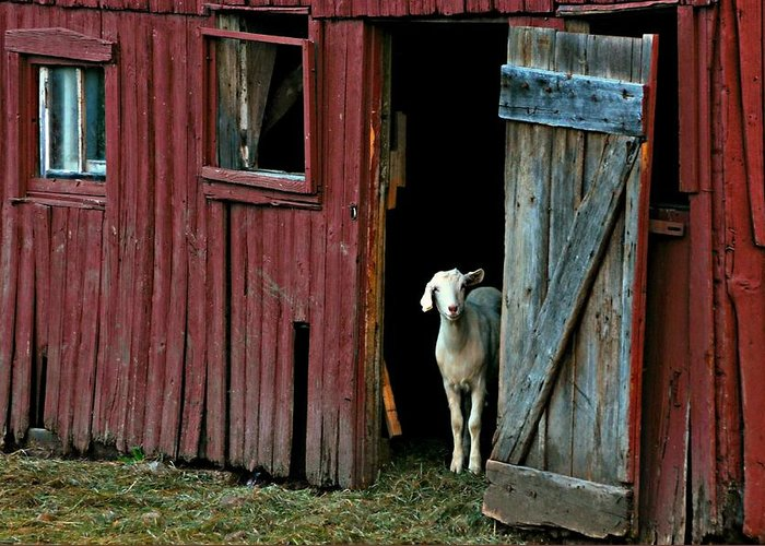 Barn Greeting Card featuring the photograph My Little Friend by Diana Angstadt
