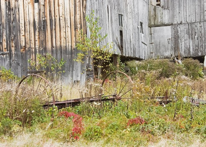 Building; Old; Old Building; Abandoned; Run-down; Architecture; Shed; Shack; Grunge; Structure; Window; Fall; Autumn; Weathered; Overgrown; Weeds; Country; Building Exterior; Rural; Rustic; Grass; Overcast; Wood; Siding; Maine; New England; Old Barn In Maine; Maine Barns; Old Barn; Weather Wood; Wooden Siding; Fall Foliage; Abandoned Building; Rustic; Rusctic Building; Maine Countryside; Country Living; Weathered Building; New England Barn Greeting Card featuring the photograph Old Barn In Fall Maine by Keith Webber Jr