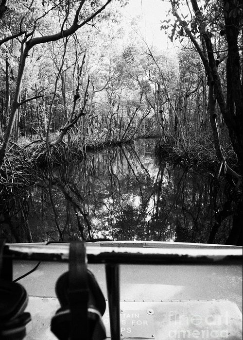 Airboat Greeting Card featuring the photograph On Board An Airboat Ride Through A Mangrove Jungle In Everglades City Florida Everglades by Joe Fox