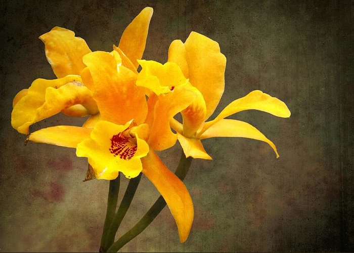 Orange Greeting Card featuring the photograph Orange Spotted Lip Cattleya Orchid by Rudy Umans