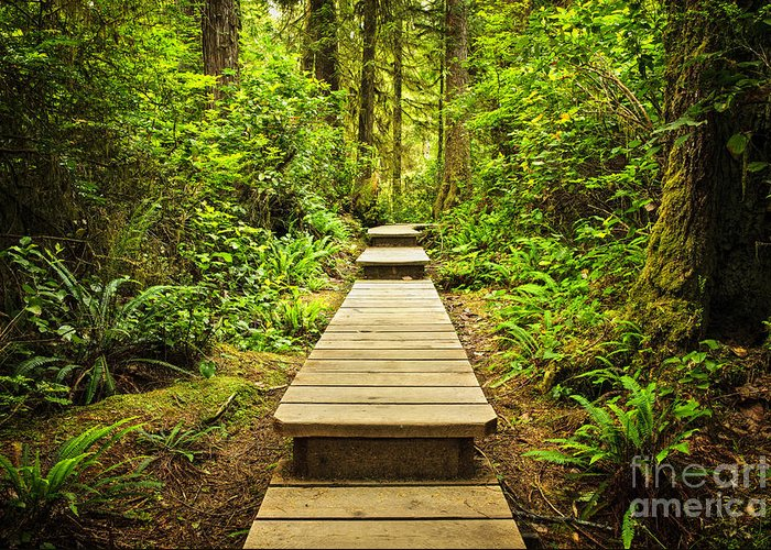Rainforest Greeting Card featuring the photograph Path In Temperate Rainforest by Elena Elisseeva