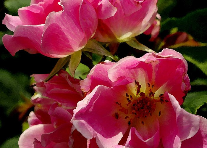 Roses Greeting Card featuring the photograph Pink Roses by James C Thomas