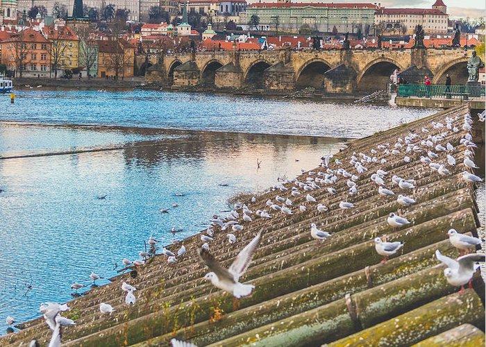 Prague Photographs Greeting Cards