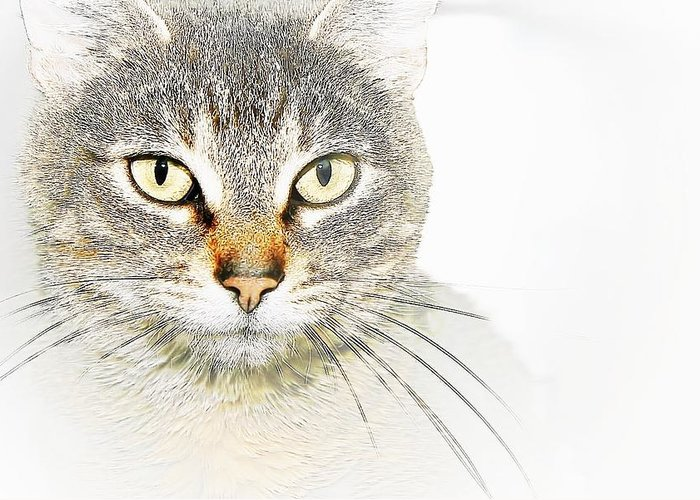 Tabby Greeting Card featuring the photograph Pretty by Joyce Baldassarre