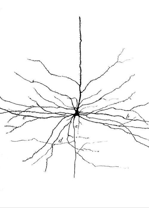Brain Cell Greeting Cards