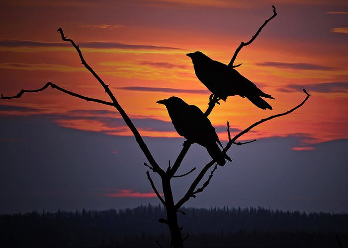Raven Greeting Card featuring the photograph 2 Ravens by Ron Day