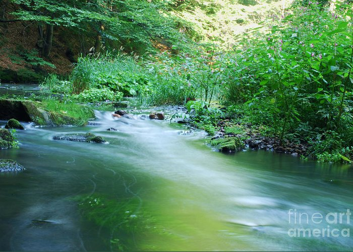Plant Greeting Card featuring the photograph River by Sarka Olehlova