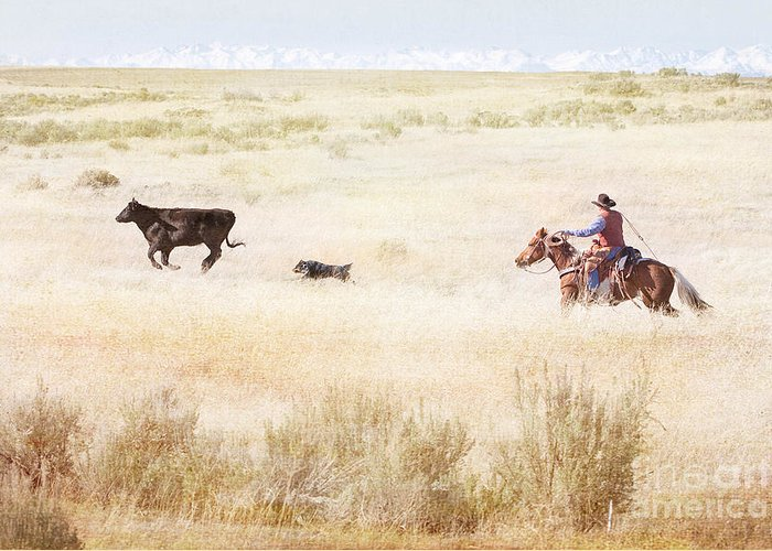 Cowboy Greeting Card featuring the photograph Round Up by Cindy Singleton
