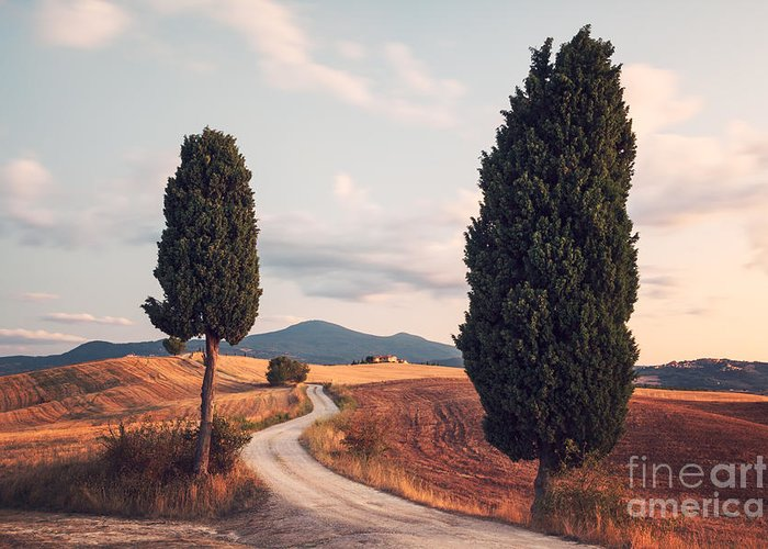 Cypress Greeting Card featuring the photograph Rural Road With Cypress Tree In Tuscany Italy by Matteo Colombo