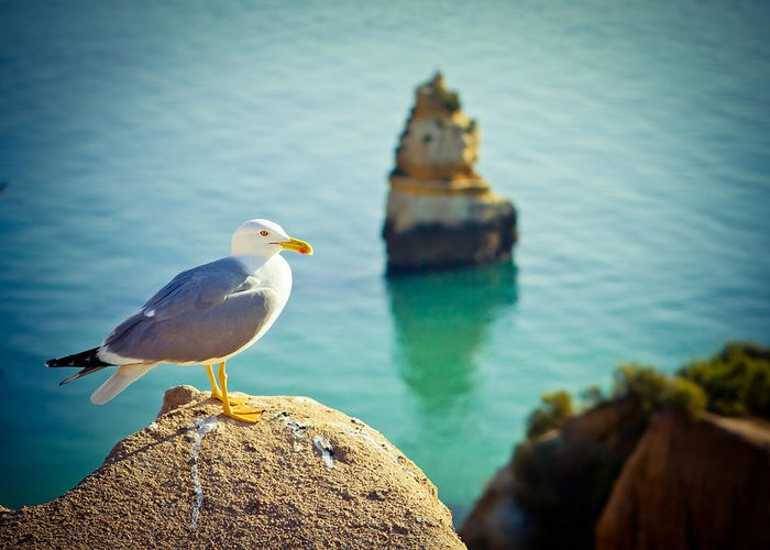 Sunlight Greeting Card featuring the photograph Seagull On The Rock by Raimond Klavins