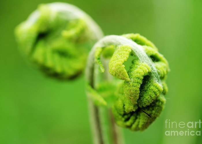 Fern Greeting Card featuring the photograph Spring Fern by David Rucker