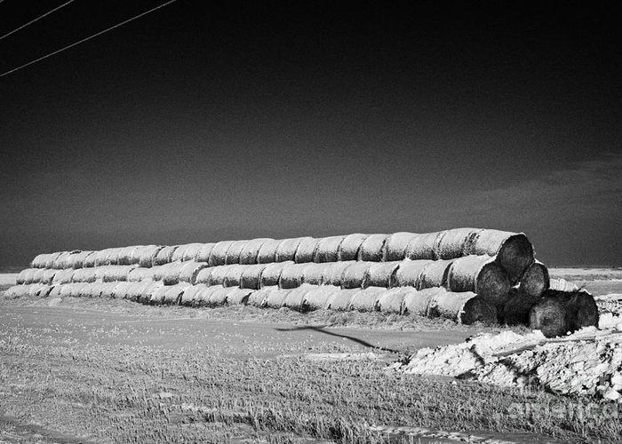 Stack Greeting Card featuring the photograph stack of frozen snow covered hay bales in a field Forget Saskatchewan Canada by Joe Fox