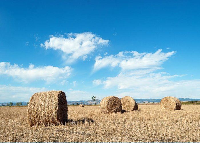 Agriculture Greeting Card featuring the pyrography Straw Bales At A Stubbel Field by Svetoslav Radkov