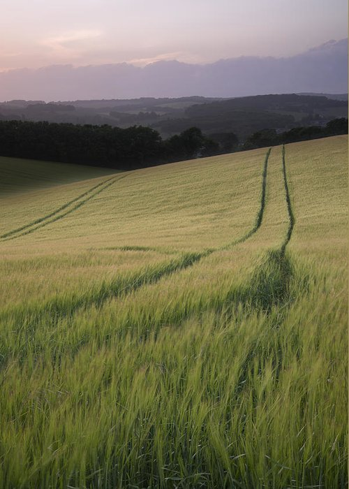 Landscape Greeting Card featuring the photograph Summer Landscape Image Of Wheat Field At Sunset With Beautiful L by Matthew Gibson
