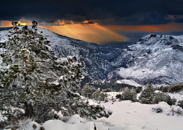 Sun Greeting Card featuring the photograph Sun Rays by Guido Montanes Castillo