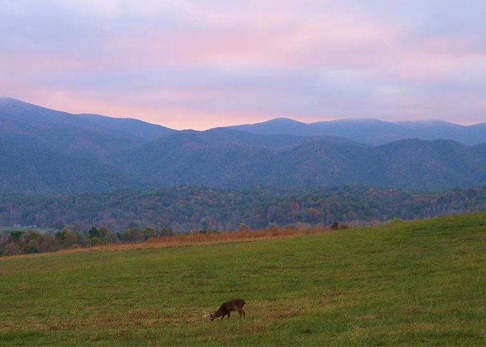 Sunrise In Cades Cove Greeting Card featuring the photograph Sunrise In Cades Cove by Dan Sproul