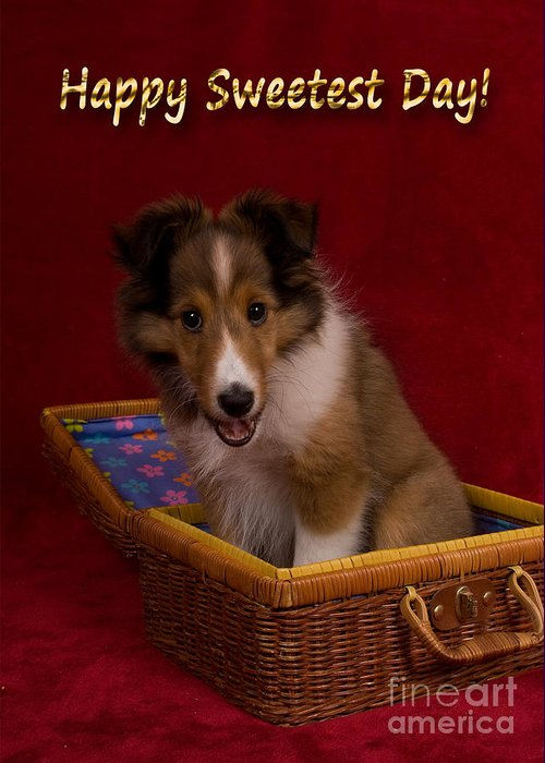 Holiday Greeting Card featuring the photograph Sweetest Day Sheltie Puppy by Jeanette K