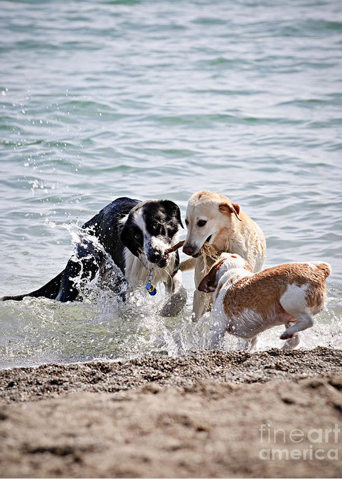 Dogs Greeting Card featuring the photograph Three Dogs Playing On Beach by Elena Elisseeva