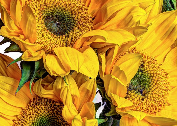 Lively Floral Design Greeting Cards