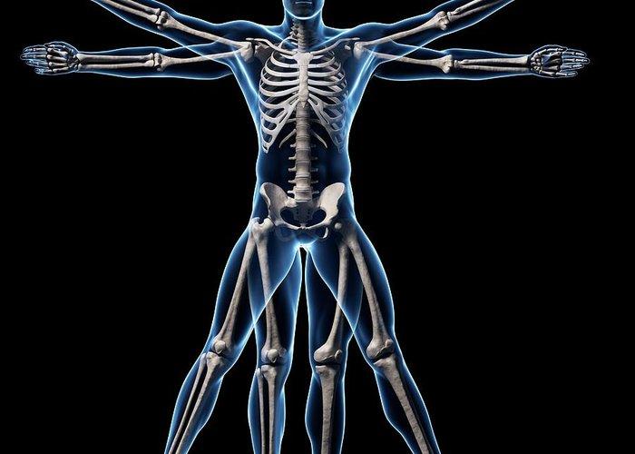 Vitruvian Man Skeleton Greeting Card For Sale By Sebastian Kaulitzki