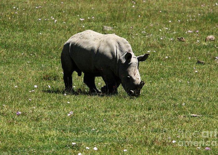 Rhinoceros Greeting Card featuring the photograph White Rhinoceros Calf by Aidan Moran