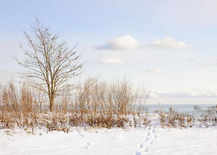 Tree Greeting Card featuring the photograph Winter Shore Of Lake Ontario by Elena Elisseeva