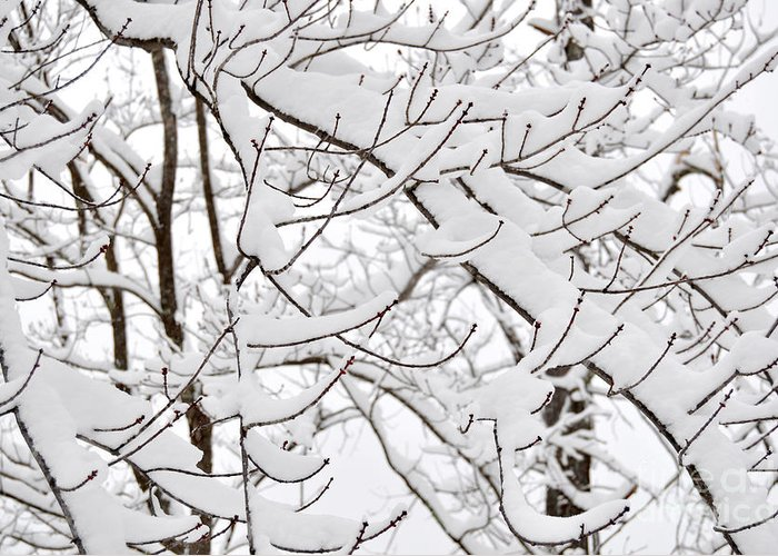 Winter Greeting Card featuring the photograph Winter Snow Scene In New England by Staci Bigelow