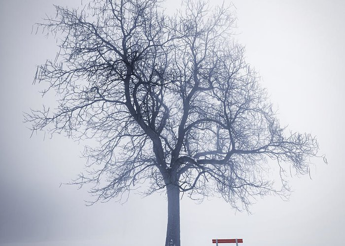 Tree Greeting Card featuring the photograph Winter Tree In Fog by Elena Elisseeva