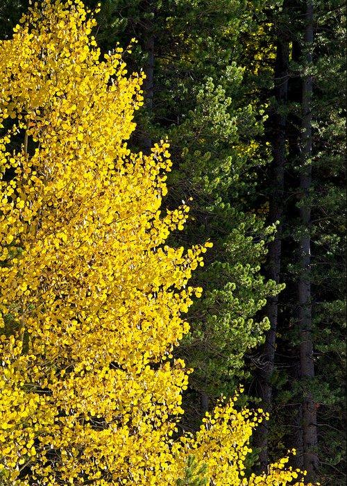 Goose Creek Mountains Greeting Card featuring the photograph Autumn by Elijah Weber
