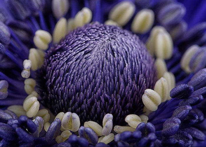 Anemone Greeting Card featuring the photograph Anemone by Mark Johnson