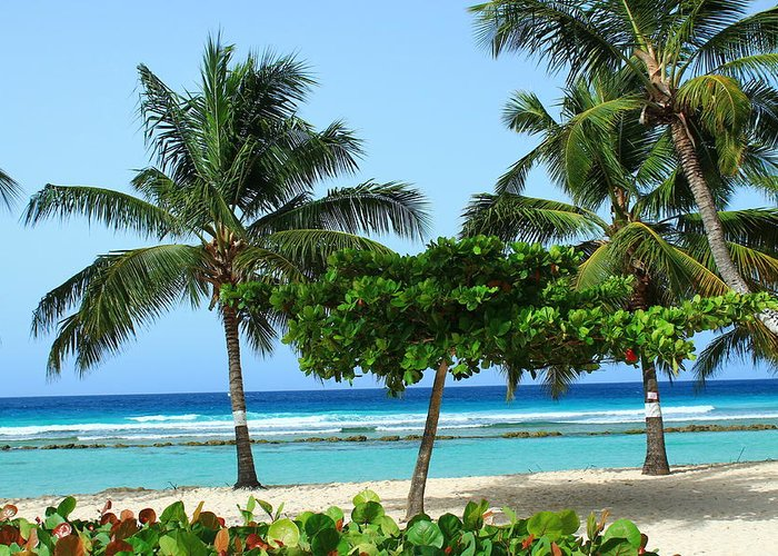 Barbados Greeting Card featuring the photograph Beach Paradise by Catie Canetti