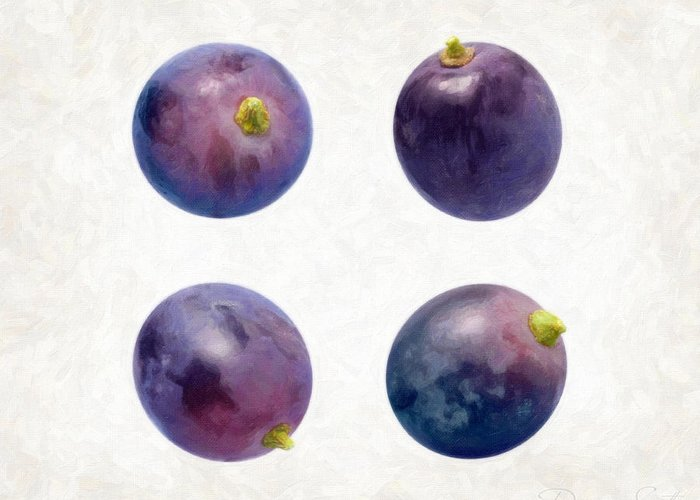 Concord Grapes Greeting Card featuring the painting Concord Grapes by Danny Smythe