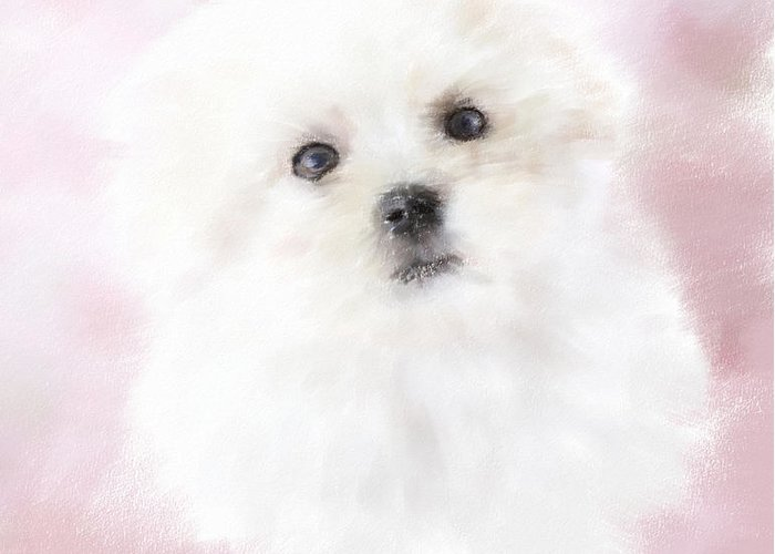 Maltese Greeting Card featuring the pastel Cute Maltese by Monika Wisniewska