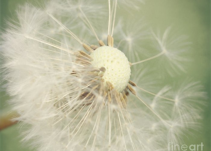 Dandelion Greeting Card featuring the photograph Dandelion by LHJB Photography