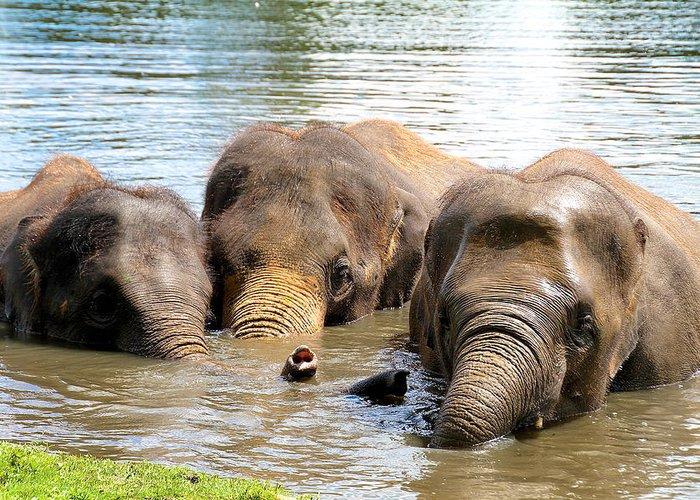 Elephants Greeting Card featuring the photograph 3 Elephants by Hilary Slater