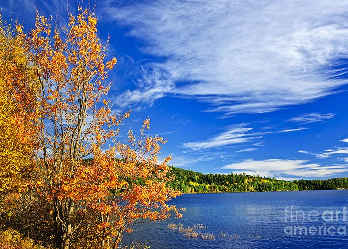 Lake Greeting Card featuring the photograph Fall Forest And Lake by Elena Elisseeva