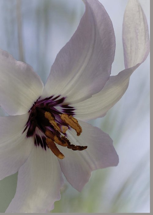 Fawn Lily Greeting Card featuring the photograph Fawn Lily by Betty Depee