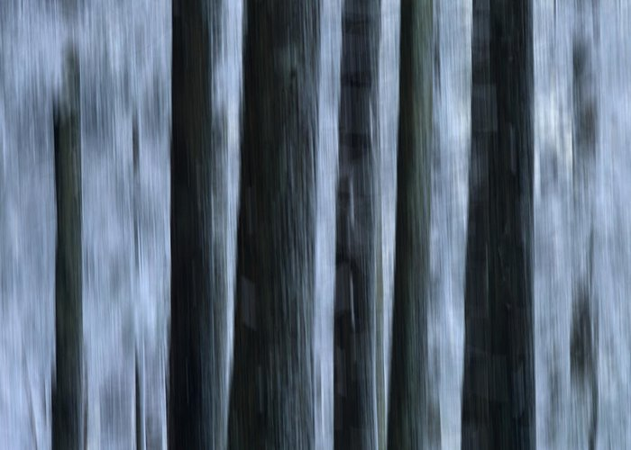 Cold Temperature Greeting Card featuring the photograph Forest by Bernard Jaubert
