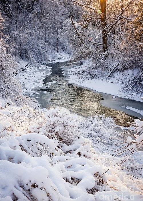 Winter Greeting Card featuring the photograph Forest Creek After Winter Storm by Elena Elisseeva