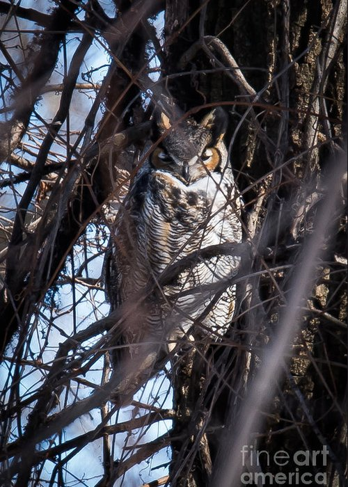 Great Horned Owl Greeting Card featuring the photograph Great Horned Owl by Ronald Grogan