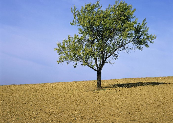 Outdoors Greeting Card featuring the photograph Isolated Tree by Bernard Jaubert