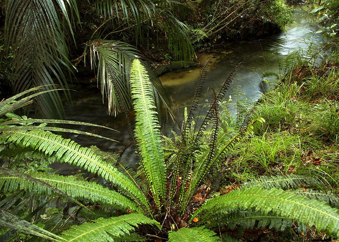 Brook Greeting Card featuring the photograph Jungle Stream by Les Cunliffe