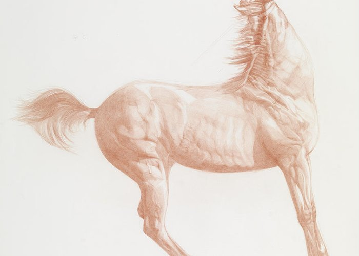 Horse Art Pastels Greeting Cards