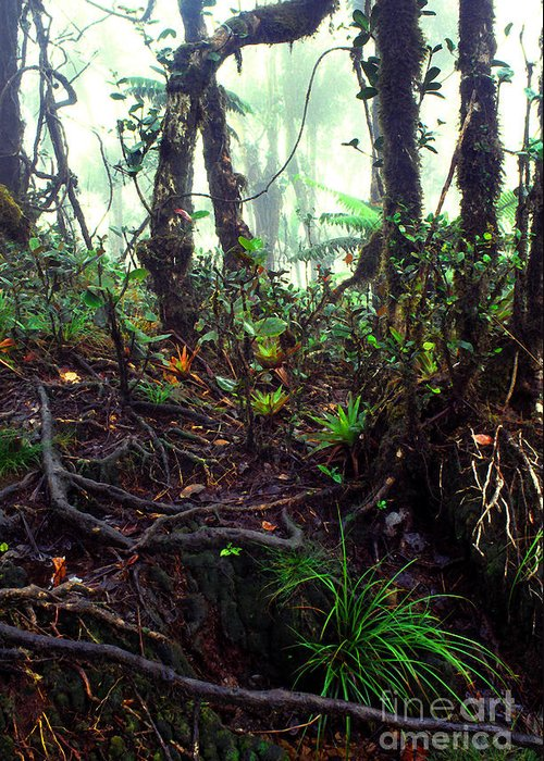 Puerto Rico Greeting Card featuring the photograph Misty Rainforest El Yunque by Thomas R Fletcher