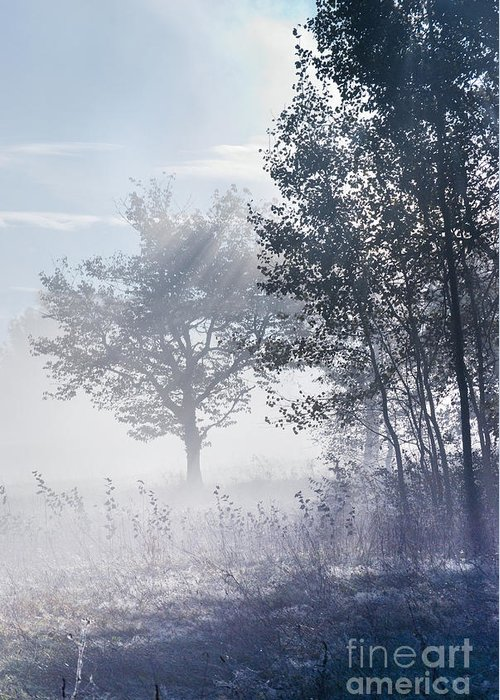 Mist Greeting Card featuring the photograph Morning Mist by Sarka Olehlova