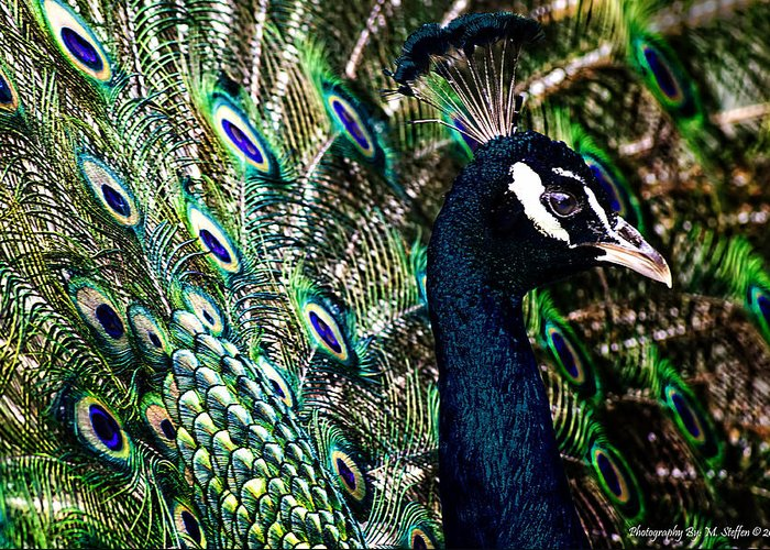 Animal Photography Greeting Card featuring the photograph Peacock by Matt Steffen